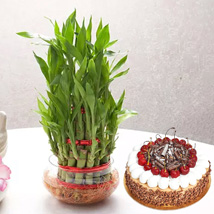 3 Layer Bamboo With Black Forest Cake